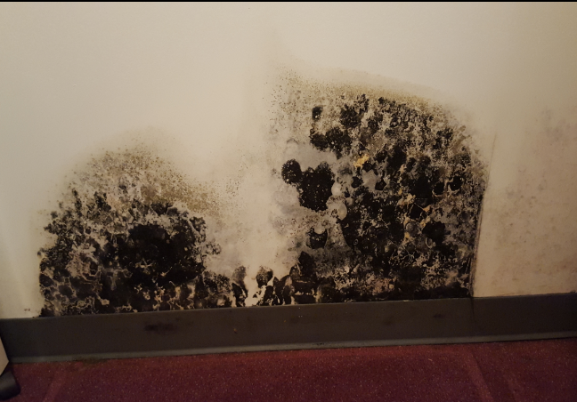 Shown In Picture 3 Stachybotrys Stachy Or Black Mold Grows When There Is An Abundance Of A Water Source For It To Feed Off